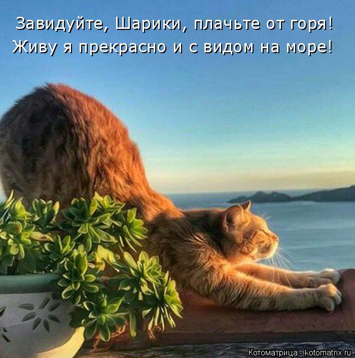 Котоматрица: Завидуйте, Шарики, плачьте от горя! Живу я прекрасно и с видом на море!