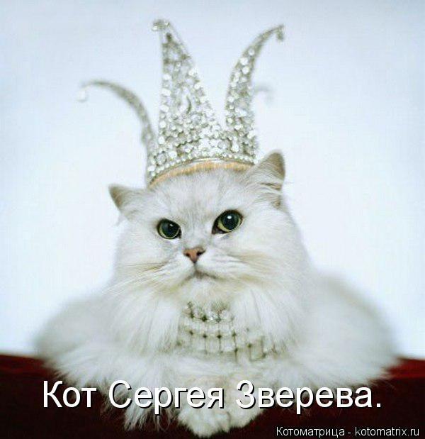 Котоматрица: Кот Сергея Зверева.