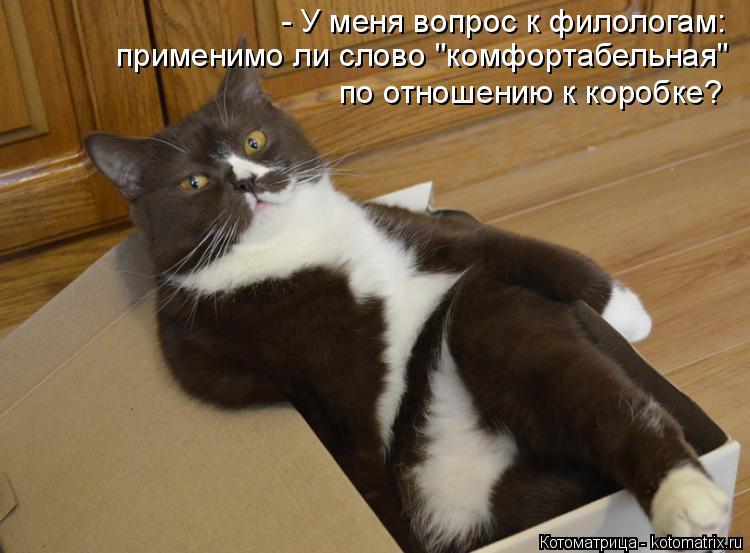 """Котоматрица: - У меня вопрос к филологам: применимо ли слово """"комфортабельная""""  по отношению к коробке?"""