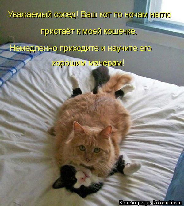 Котоматрица: Уважаемый сосед! Ваш кот по ночам нагло  пристаёт к моей кошечке.  Немедленно приходите и научите его   хорошим манерам!