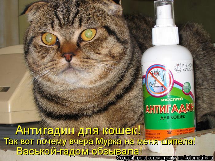 Котоматрица: Антигадин для кошек! Так вот почему вчера Мурка на меня шипела! Васькой-гадом обзывала!