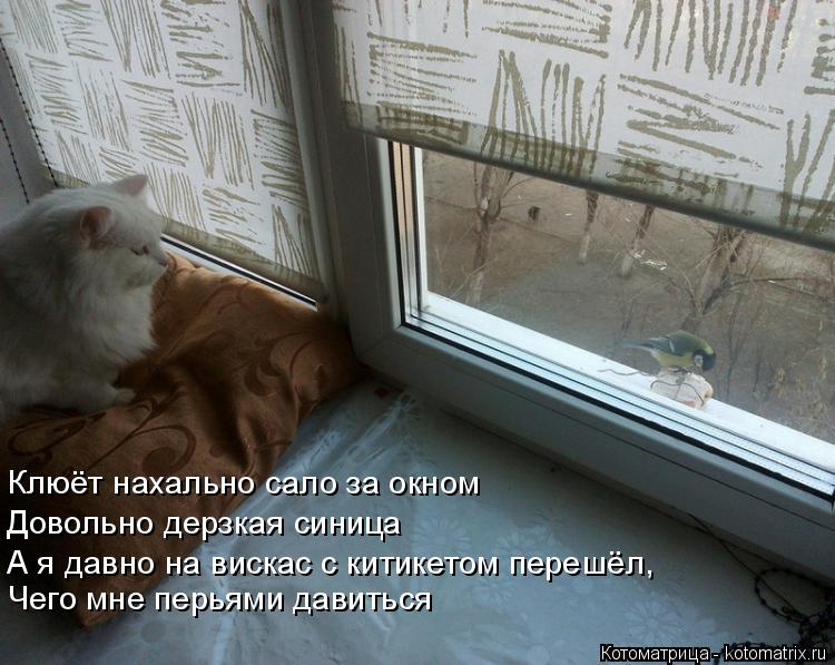 Котоматрица: Клюёт нахально сало за окном Довольно дерзкая синица  А я давно на вискас с китикетом перешёл,  Чего мне перьями давиться