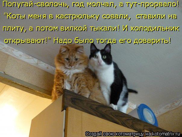 """Котоматрица: """"Коты меня в кастрюльку совали,  ставили на Попугай-сволочь, год молчал, а тут-прорвало! плиту, а потом вилкой тыкали! И холодильник  открываю"""