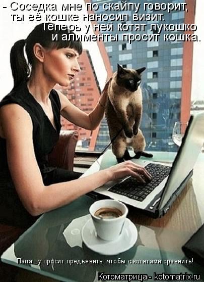 Котоматрица: - Соседка мне по скайпу говорит,  ты её кошке наносил визит. Теперь у ней котят лукошко и алименты просит кошка. Папашу просит предъявить, что