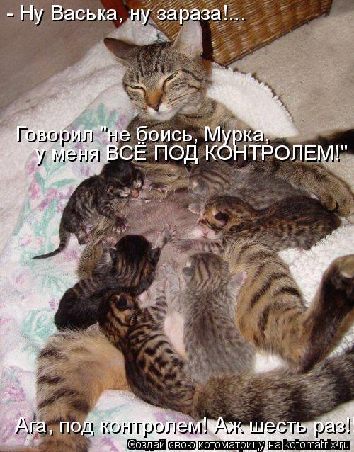 "Котоматрица: - Ну Васька, ну зараза!... Говорил ""не боись, Мурка,  у меня ВСЁ ПОД КОНТРОЛЕМ!"" Ага, под контролем! Аж шесть раз!!"
