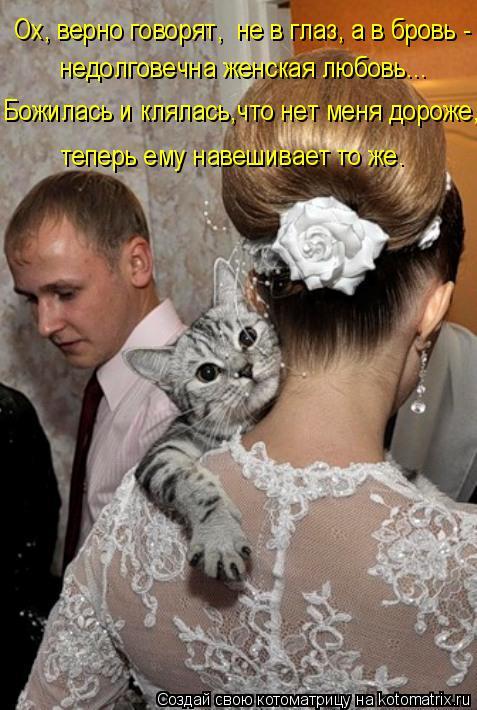 Котоматрица: Ох, верно говорят,  не в глаз, а в бровь - недолговечна женская любовь... Божилась и клялась,что нет меня дороже, теперь ему навешивает то же.