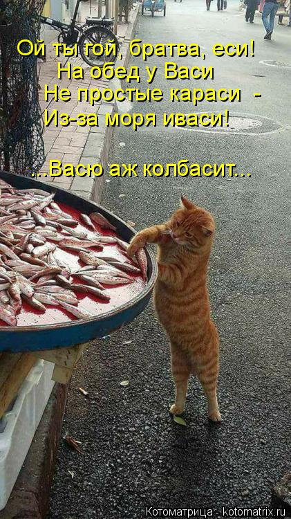 Котоматрица: Ой ты гой, братва, еси! На обед у Васи Не простые караси  - Из-за моря иваси! ...Васю аж колбасит...