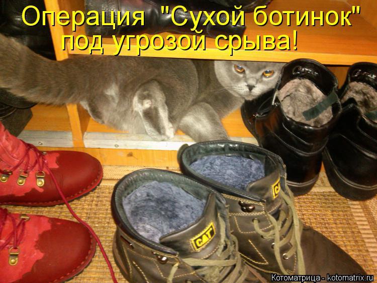 """Котоматрица: Операция  """"Сухой ботинок"""" под угрозой срыва!"""
