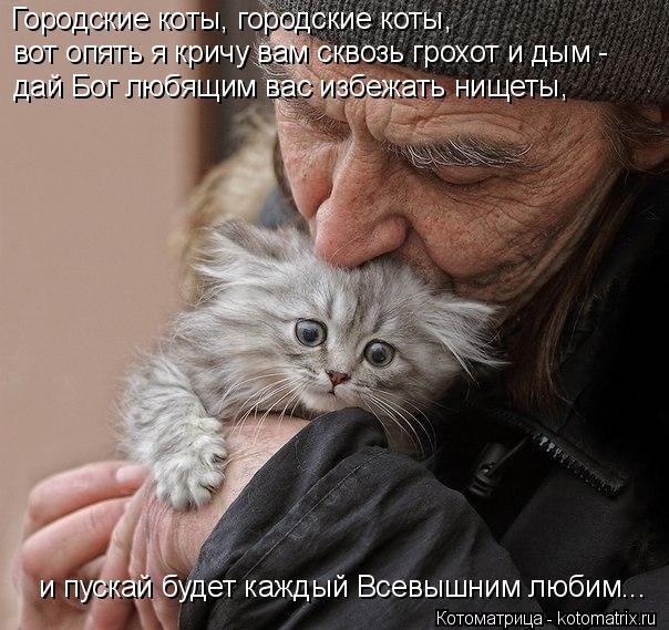 Котоматрица: Городские коты, городские коты,  вот опять я кричу вам сквозь грохот и дым -  дай Бог любящим вас избежать нищеты,   и пускай будет каждый Всев