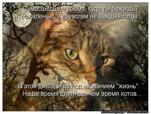 """Котоматрица: Наше время длиннее, чем время котов... Сумасшедшее время, куда ты бежишь? В этой дикой игре под названием """"жизнь"""" К сожаленью, к тревогам не ка"""