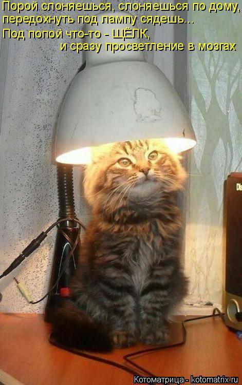 Котоматрица: Порой слоняешься, слоняешься по дому, передохнуть под лампу сядешь... Под попой что-то - ЩЁЛК, и сразу просветление в мозгах