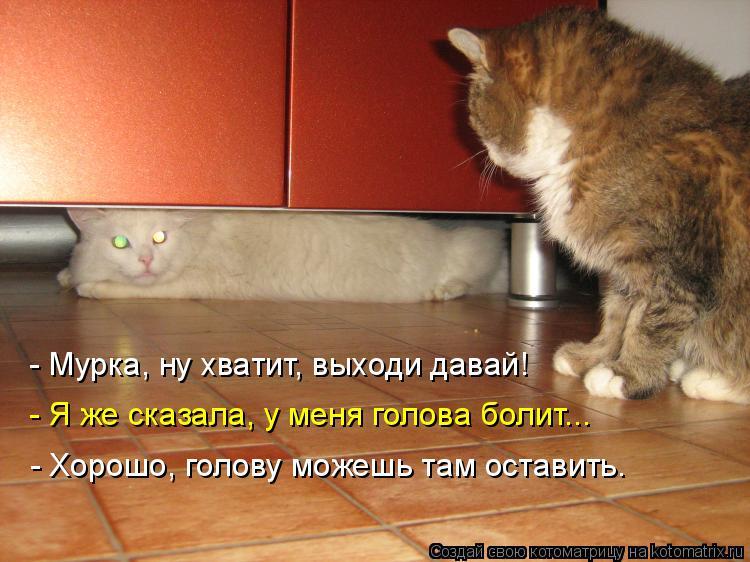 Котоматрица: - Мурка, ну хватит, выходи давай! - Я же сказала, у меня голова болит... - Хорошо, голову можешь там оставить.