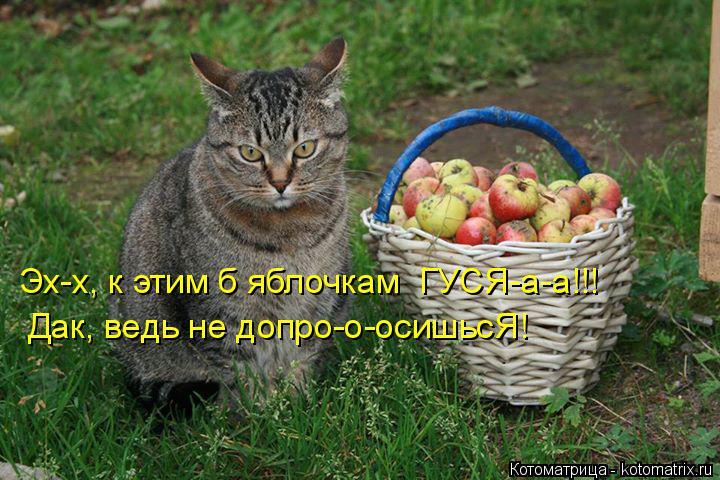 Котоматрица: Эх-х, к этим б яблочкам  ГУСЯ-а-а!!! Дак, ведь не допро-о-осишьсЯ!