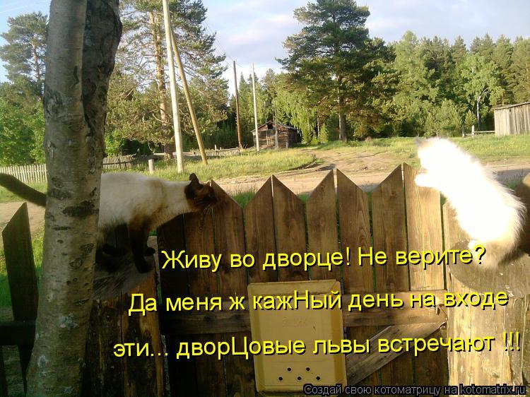 Котоматрица: Живу во дворце! Не верите? Да меня ж кажНый день на входе эти... дворЦовые львы встречают !!!