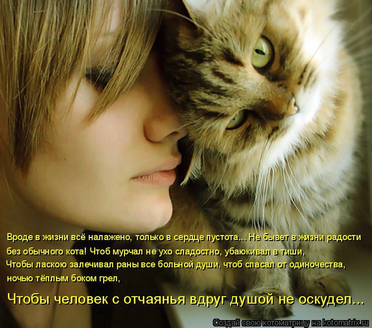 Котоматрица: Вроде в жизни всё налажено, только в сердце пустота... Не бывет в жизни радости  без обычного кота! Чтоб мурчал не ухо сладостно, убаюкивал в т