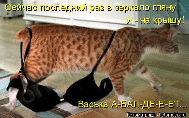 Котоматрица: Сейчас последний раз в зеркало гляну  и - на крышу! Васька А-БАЛ-ДЕ-Е-ЕТ...