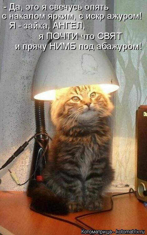 Котоматрица: - Да, это я свечусь опять с накалом ярким, с искр ажуром! Я - зайка, АНГЕЛ, я ПОЧТИ что СВЯТ и прячу НИМБ под абажуром!