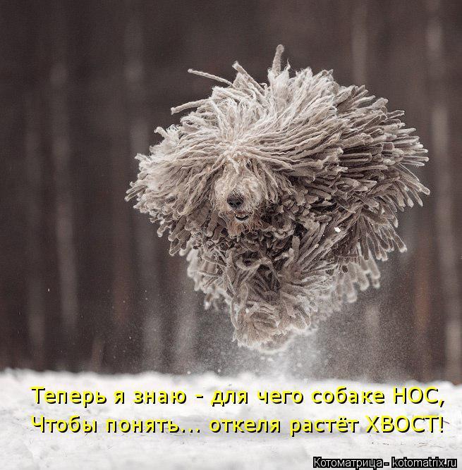 Котоматрица: Теперь я знаю - для чего собаке НОС, Чтобы понять... откеля растёт ХВОСТ!