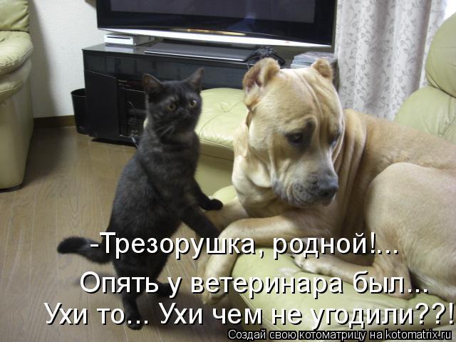 Котоматрица: -Трезорушка, родной!... Опять у ветеринара был... Ухи то... Ухи чем не угодили??!