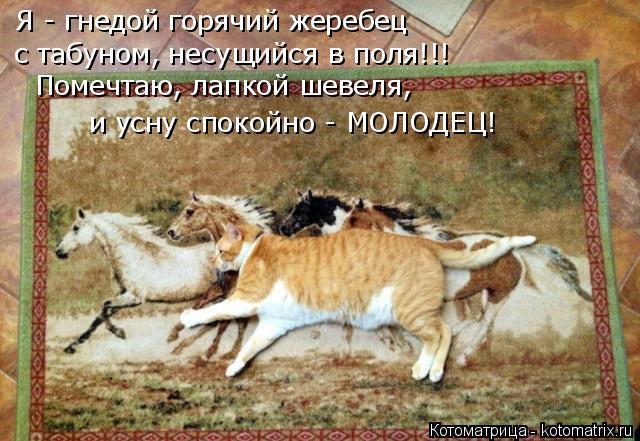 Котоматрица: Я - гнедой горячий жеребец с табуном, несущийся в поля!!! Помечтаю, лапкой шевеля, и усну спокойно - МОЛОДЕЦ!