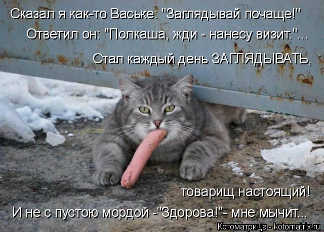 """Котоматрица: Сказал я как-то Ваське: """"Заглядывай почаще!"""" Ответил он: """"Полкаша, жди - нанесу визит.""""... Стал каждый день ЗАГЛЯДЫВАТЬ, товарищ настоящий! И не с"""