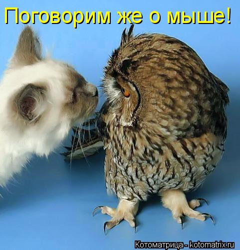 Котоматрица: Поговорим же о мыше!