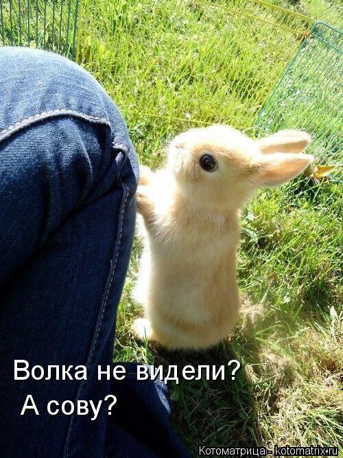 Котоматрица: Волка не видели?  А сову?