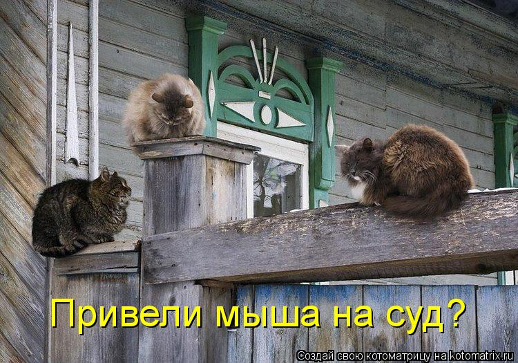 Котоматрица: Привели мыша на суд?