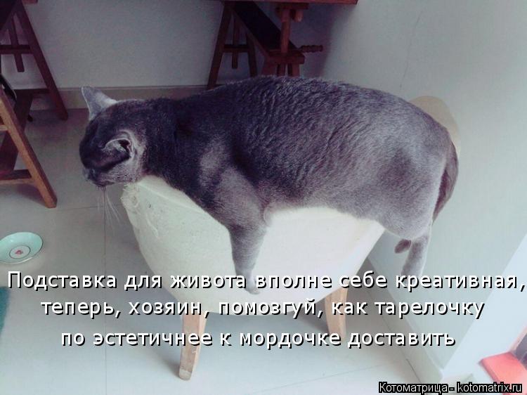 Котоматрица: Подставка для живота вполне себе креативная, теперь, хозяин, помозгуй, как тарелочку  по эстетичнее к мордочке доставить