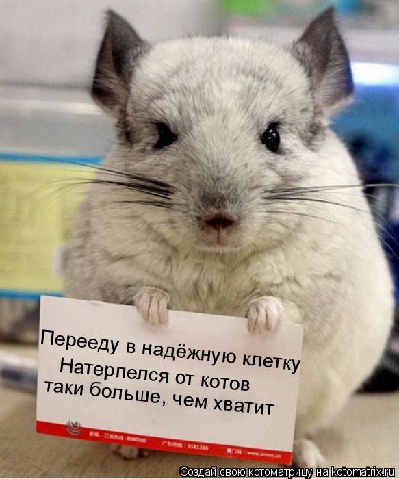 Котоматрица: Перееду в надёжную клетку Натерпелся от котов таки больше, чем хватит