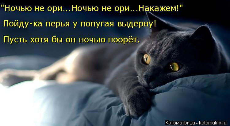 """Котоматрица: Пусть хотя бы он ночью поорёт. Пойду-ка перья у попугая выдерну! """"Ночью не ори...Ночью не ори...Накажем!"""""""