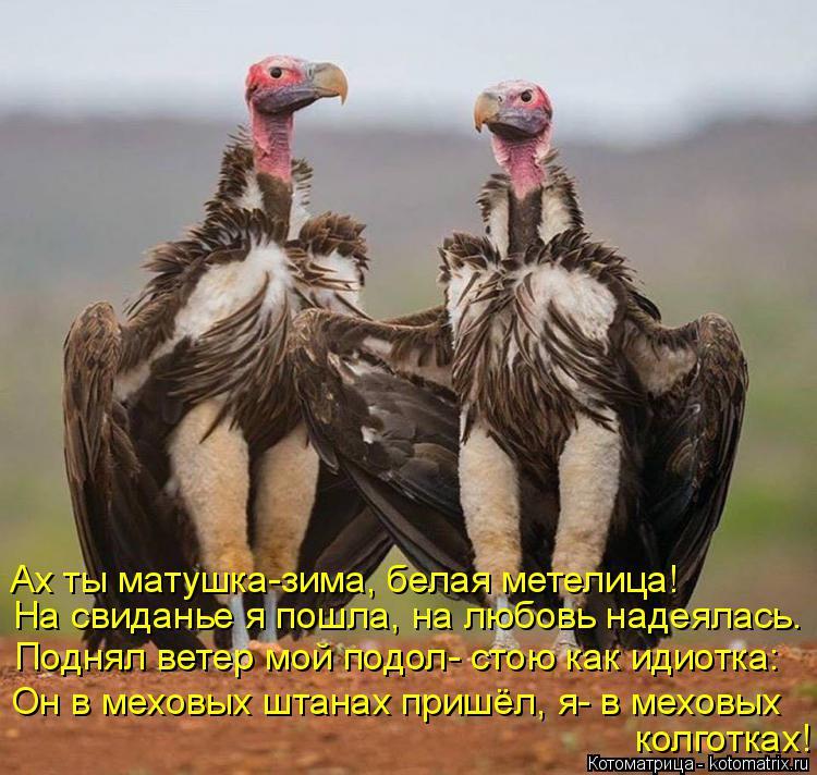 http://kotomatrix.ru/images/lolz/2017/12/04/kotomatritsa_W.jpg