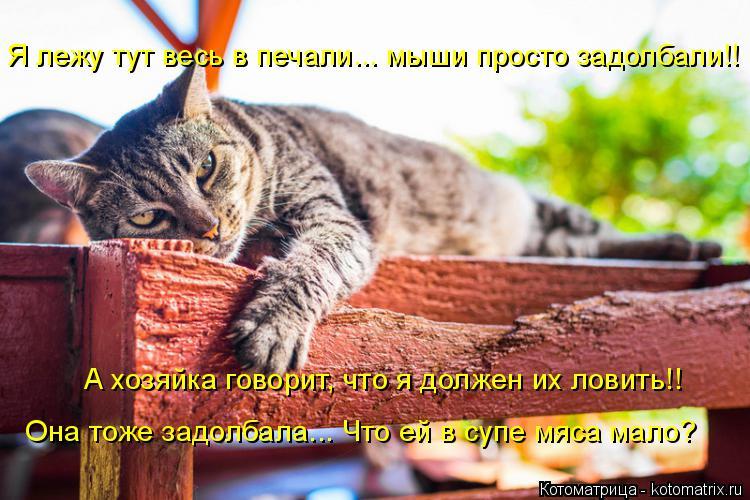 Котоматрица: Я лежу тут весь в печали... мыши просто задолбали!! А хозяйка говорит, что я должен их ловить!! Она тоже задолбала... Что ей в супе мяса мало?