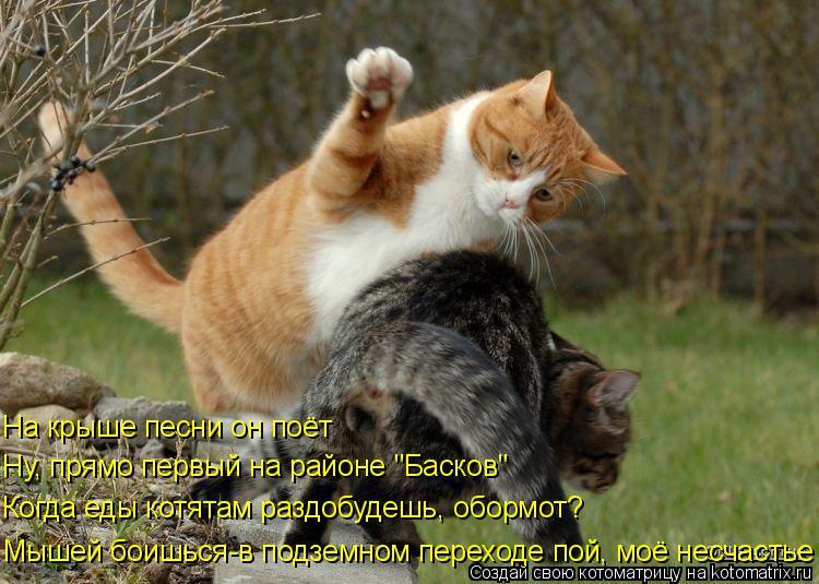 """Котоматрица: На крыше песни он поёт  Мышей боишься-в подземном переходе пой, моё несчастье Ну, прямо первый на районе """"Басков""""  Когда еды котятам раздобуд"""