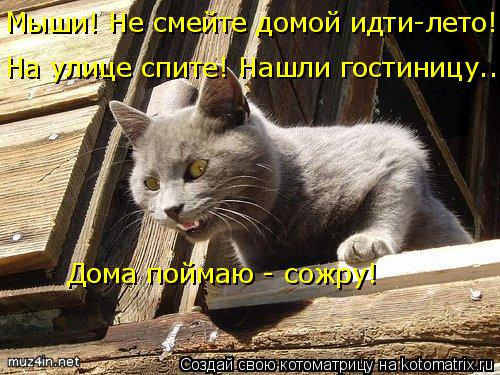 Котоматрица: Мыши! Не смейте домой идти-лето! Дома поймаю - сожру! На улице спите! Нашли гостиницу...