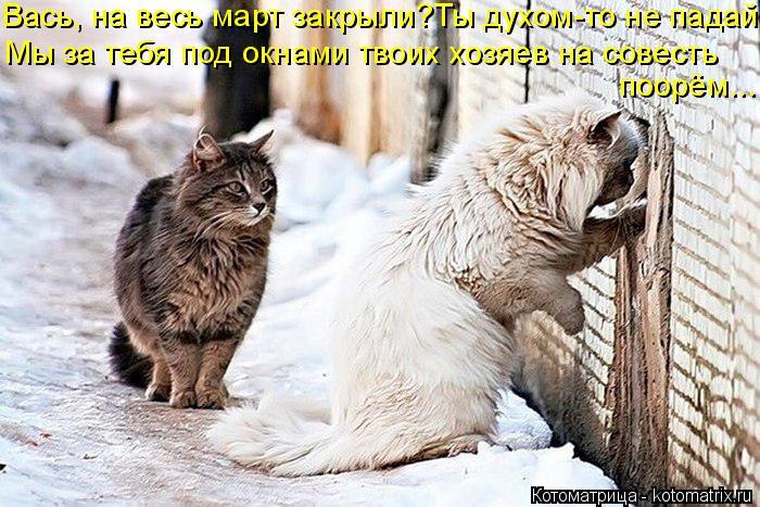 Котоматрица: Вась, на весь март закрыли?Ты духом-то не падай Мы за тебя под окнами твоих хозяев на совесть  поорём...