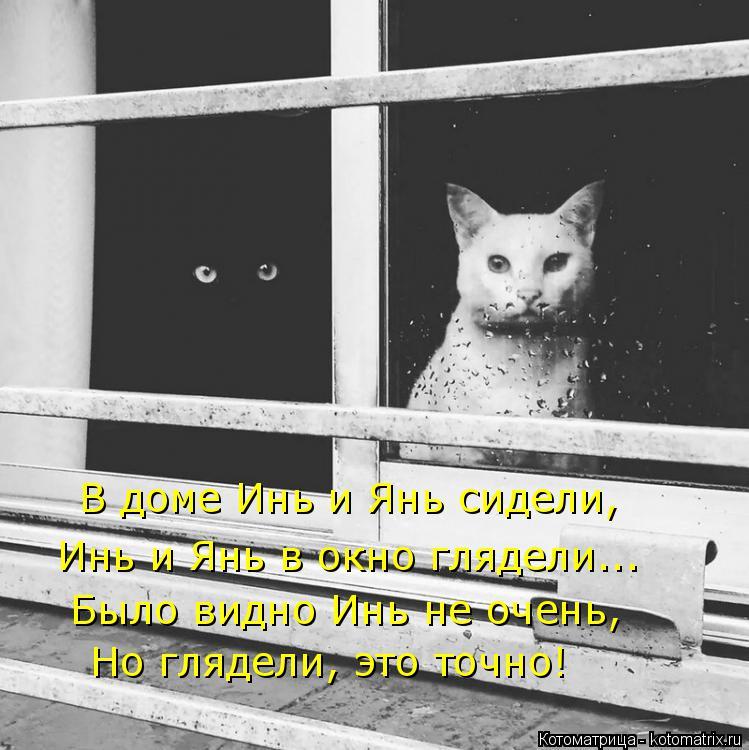 Котоматрица: В доме Инь и Янь сидели, Инь и Янь в окно глядели... Было видно Инь не очень, Но глядели, это точно!