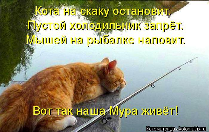 Котоматрица: Кота на скаку остановит. Пустой холодильник запрёт.  Мышей на рыбалке наловит.  Вот так наша Мура живёт!
