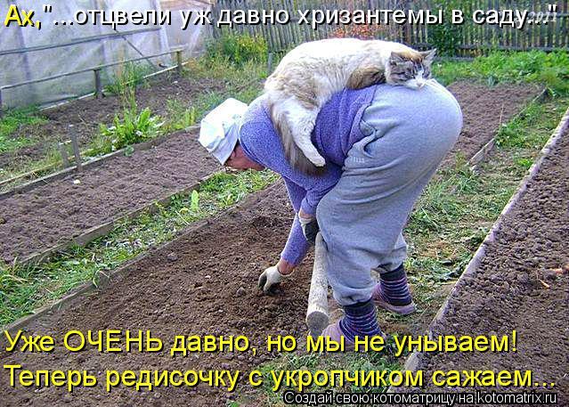 """Котоматрица: Ах,""""...отцвели уж давно хризантемы в саду..."""" Ах, Уже ОЧЕНЬ давно, но мы не унываем! Теперь редисочку с укропчиком сажаем..."""