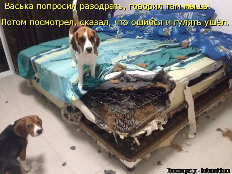 Котоматрица: Васька попросил разодрать, говорил там мышь! Потом посмотрел, сказал, что ошибся и гулять ушёл.