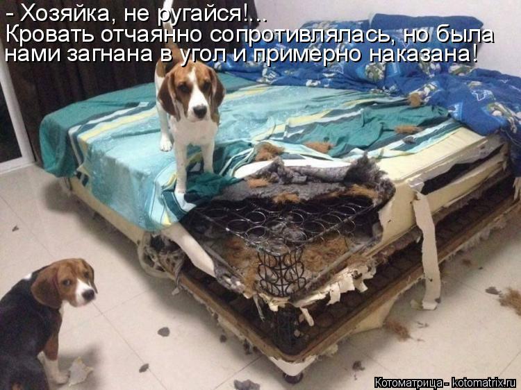 Котоматрица: - Хозяйка, не ругайся!... Кровать отчаянно сопротивлялась, но была нами загнана в угол и примерно наказана!