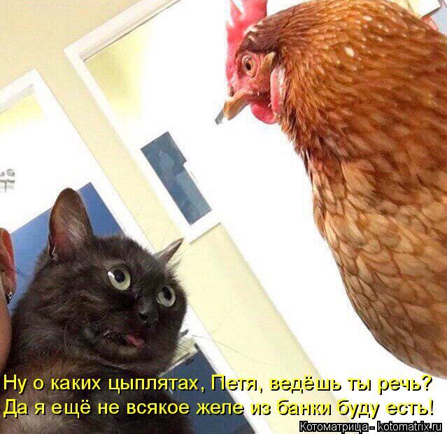 Котоматрица: Ну о каких цыплятах, Петя, ведёшь ты речь? Да я ещё не всякое желе из банки буду есть!