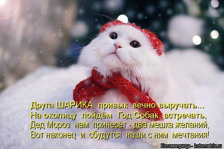 Котоматрица: Друга ШАРИКА  привык  вечно выручать... На околицу  пойдём  Год Собак  встречать, Дед Мороз  нам  принесёт - два мешка желаний, Вот наконец  и  сб