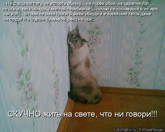 Котоматрица: - Не стащи котлету, не испорть обивку,... не порви обои, не царапни пол,... не скачи, как лошадь, с мелкой перебивкой,... ночью не кошмарься и не жр