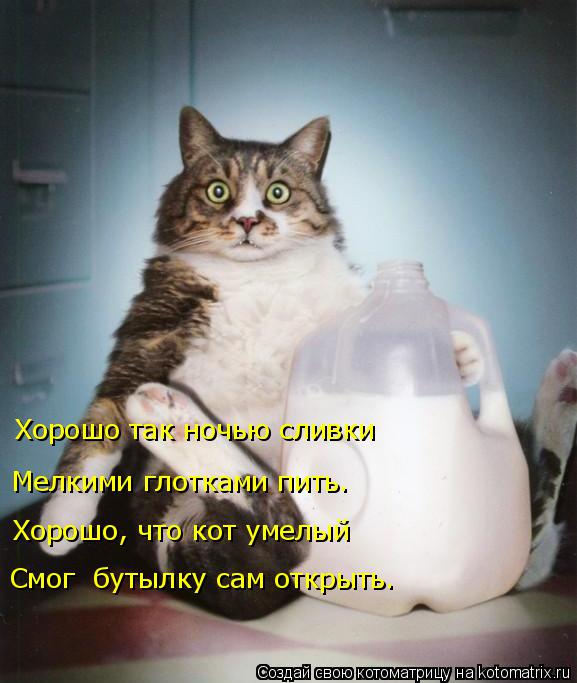 Котоматрица: Хорошо так ночью сливки Мелкими глотками пить. Хорошо, что кот умелый Смог  бутылку сам открыть.