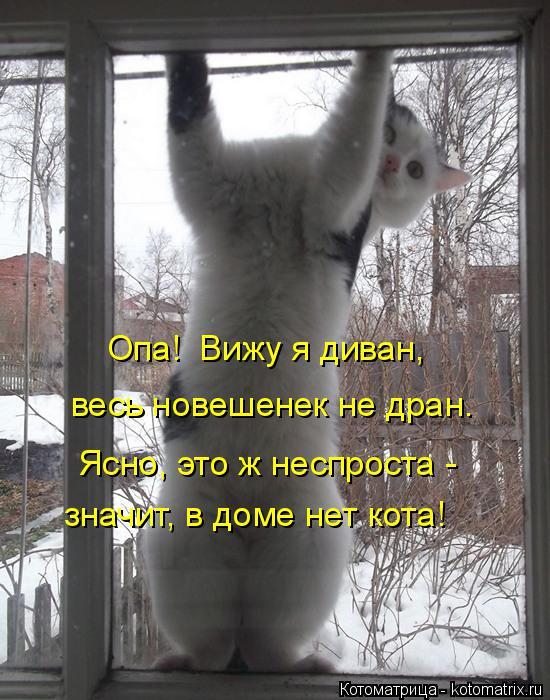 Котоматрица: весь новешенек не дран. Ясно, это ж неспроста -  значит, в доме нет кота! Опа!  Вижу я диван,