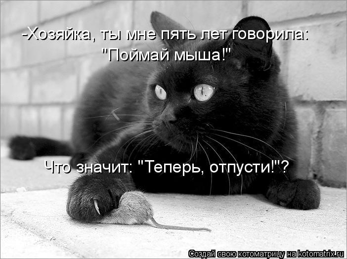 """Котоматрица: -Хозяйка, ты мне пять лет говорила: """"Поймай мыша!"""" Что значит: """"Теперь, отпусти!""""?"""