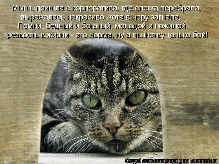 Котоматрица: Мышь пришла с корпоратива, где слегка перебрала,  выражалась некрасиво, кота в нору загнала... Помни, бедный и богатый, молодой и пожилой, тре