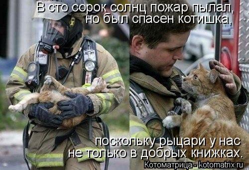Котоматрица: В сто сорок солнц пожар пылал,  но был спасен котишка,  поскольку рыцари у нас  не только в добрых книжках.