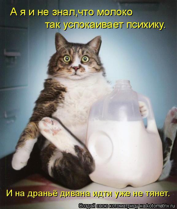 Котоматрица: А я и не знал,что молоко так успокаивает психику. И на драньё дивана идти уже не тянет.